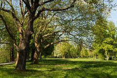 Paradise Park Jena Royalty Free Stock Image