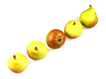 Paradise pears Stock Images