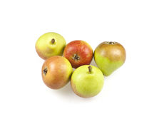 Paradise pears Royalty Free Stock Image