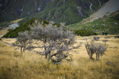 Paradise places in South New Zealand / Mount Cook National Park Stock Photography