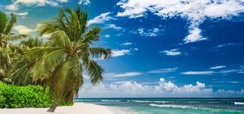 Paradise resort beach palm tree sea Dominican Republic. Caribbean Sea coast white sand resort beach palm tree Dominican Republic Stock Photos
