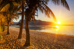 Paradise sandy beach with palm trees and mountains at sunset. Royalty Free Stock Photos