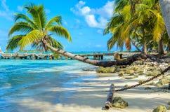 Paradise-Strand auf Insel caye Carrie Bow Cay Field Station, karibisches Meer, Belize Tropische Zieleinheit lizenzfreie stockfotos