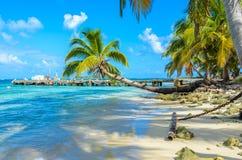 Paradise-Strand auf Insel caye Carrie Bow Cay Field Station, karibisches Meer, Belize Tropische Zieleinheit stockfoto