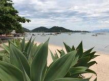 Paradise su terra, la spiaggia verde dell'Oceano Atlantico del sud fotografia stock