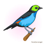 Paradise tanager bird educational game vector Royalty Free Stock Photography