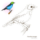 Paradise tanager bird learn to draw vector Stock Photography