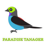 Paradise Tanager Bird Line Art Icon Royalty Free Stock Photography