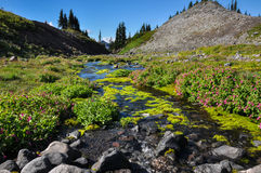 Paradise trail in Mount Rainier National Park, Washington, USA Stock Photos