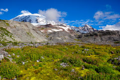 Paradise trail in Mount Rainier National Park, Washington, USA Royalty Free Stock Photos