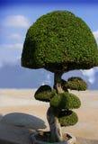 Paradise tree Stock Image