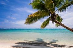 Paradise tropical beach and lagoon in Moorea Island Stock Photography