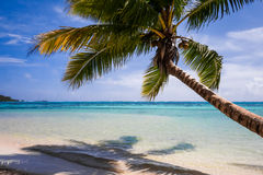 Paradise tropical beach and lagoon in Moorea Island Royalty Free Stock Images