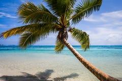 Paradise tropical beach and lagoon in Moorea Island Stock Image