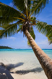 Paradise tropical beach and lagoon in Moorea Island Stock Photo