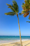 Paradise tropical beach Royalty Free Stock Images