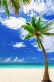 Paradise tropical beach palm the Caribbean Sea Royalty Free Stock Photo