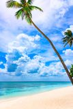 Paradise tropical beach palm the Caribbean Sea Stock Photography
