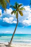 Paradise tropical beach palm Royalty Free Stock Images