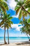 Paradise tropical beach palm Stock Photo