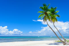 Paradise tropical beach palm Royalty Free Stock Photos