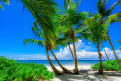 Paradise tropical beach palm Stock Images