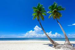 Paradise tropical beach palm Stock Image