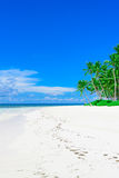 Paradise tropical beach palm Royalty Free Stock Photography