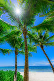 Paradise tropical beach palm Stock Photos
