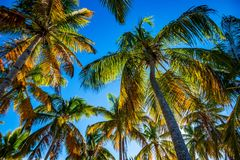 Tropical beach with palm trees. Paradise tropical beach with palm trees on blue sky background Stock Photography