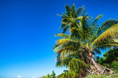 Tropical beach with palm trees. Paradise tropical beach with palm trees on blue sky background Royalty Free Stock Images