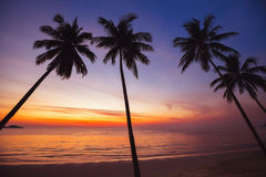 Paradise tropical beach at sunset, exotic landscape stock photography