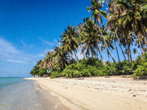 Paradise tropical island. Beach and palm trees royalty free stock images