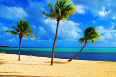 Paradise. The ultimate get away vacation, the quiet secluded beaches of Little Cayman.  With warm Caribbean ocean, golden sand, palm trees and peace and quiet Royalty Free Stock Image