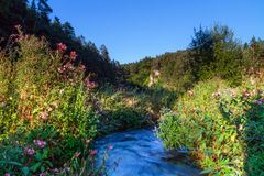 Paradise Vale. Stream in the Bavarian Countryside Stock Images