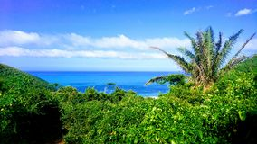 Paradise view of palms and carribbean sea at Playa Brava, Teyrona Nationalpark, Colombia. View over the bay of Playa Brava at the northern carribbean coast of Royalty Free Stock Photography