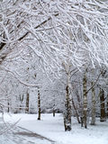 Paradise view of winter with trees covered by snow Stock Images