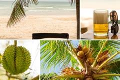 Paradise vilar kokosnötter för havet för sand för den collageasia stranden gömma i handflatan på den gröna taggiga durianen som f royaltyfria bilder