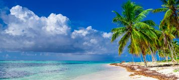 Paradise beach tree palm tree. Paradise of white sand beach of the Caribbean sea turquoise sea tree palm tree on the shore Stock Image