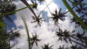Paradiskokosnötpalmträd på blå himmel på lyx stock video