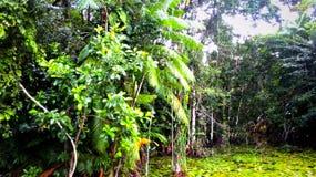 Paradislopp i Amazon River i Brasilien Royaltyfria Foton