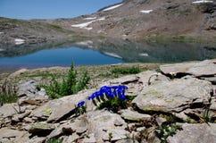 Paradiso alpino Fotografie Stock