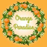 Paradiso arancione Immagini Stock