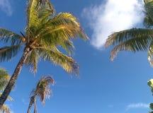 Paradiso caraibico Immagini Stock Libere da Diritti