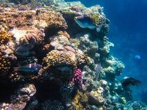 Paradiso del mare Immagine Stock
