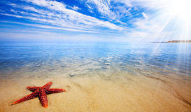 Paradiso delle stelle marine Immagine Stock