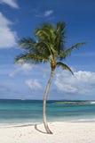 Paradiso tropicale Immagini Stock