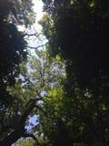 Paradiso verde Immagine Stock