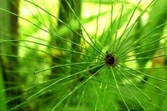 Paradiso verde Fotografie Stock