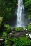 Paradisvattenfall, Bali Bakgrund för naturskönhetlandskap Arkivbilder